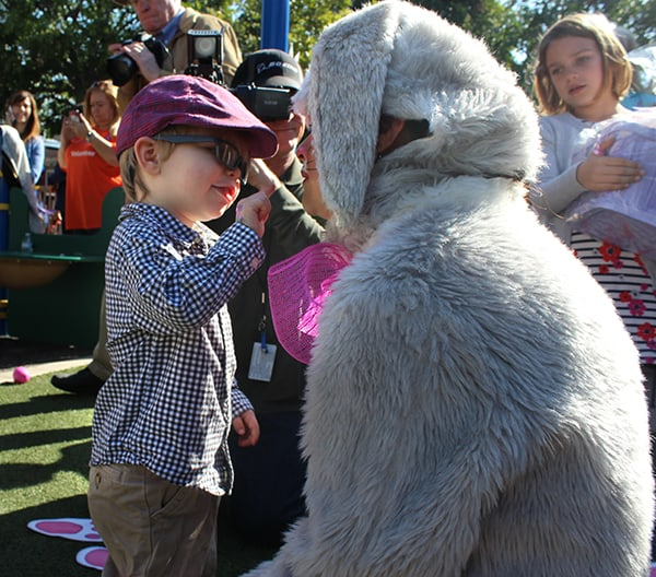 A preschool boy with glasses reaches out to touch the nose of a woman dressed in an Easter bunny costume
